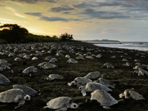sea_turtles_2